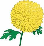 Chrysanthemums 02