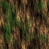 Tree Bark 09