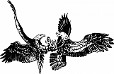 Eagles 01