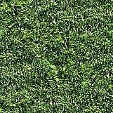 Grass 33