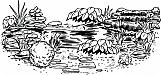 Pond Scene 01