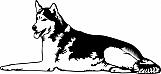 Husky 001