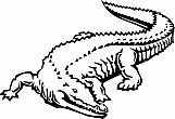 Alligator 02