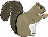 Squirrel 01