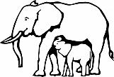 Elephants 01