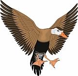 Duck 06