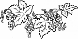 Grape Vines 02