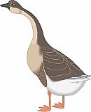 Goose 06