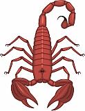 Scorpion 02