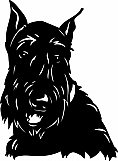 Scottish Terrier 01