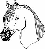 Horse 09