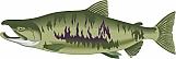 Salmon 03