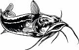Catfish 03