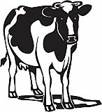 Cow 01