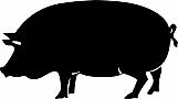 Pig 02