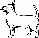 Chihuahua 01