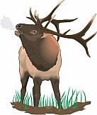 Elk 03