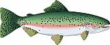 Trout 05