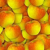 Apples 05
