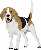 Beagle 04