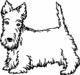 Scottish Terrier 002
