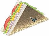 Sandwich 01