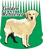 Golden Retriever 03