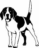 Beagle 03