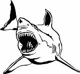 Shark 09