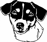 Jack Russell Terrier 001