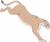 Cougar 04
