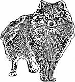 Pomeranian 01