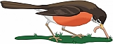 Early Bird 01