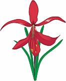 Aztec Lily 01