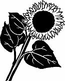 Sunflower 02