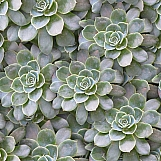 Succulents 01
