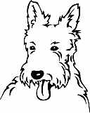 West Highland Terrier 001