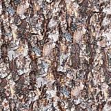Tree Bark 25