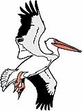 Pelican 05