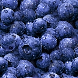 Blueberries 01