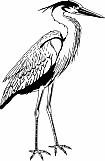 Heron 01
