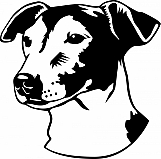 Jack Russell Terrier 002