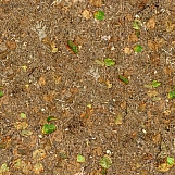 Ground Cover 08