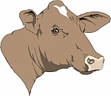 Cow 05