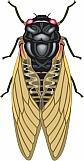 Cicada 01