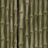 Bamboo 05