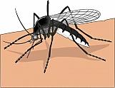 Mosquito 02