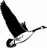Goose 01
