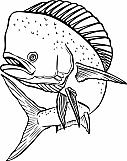 Dolphin 06
