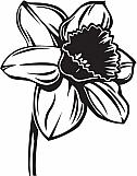 Daffodil 01